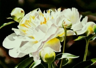 gnott's peony family oil painting